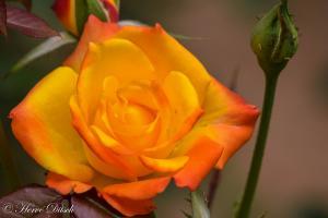 Floral (1)