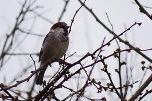 Oiseau (1)