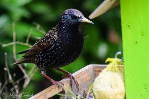 Oiseau (6)
