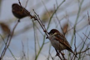 Oiseau (8)