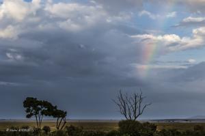 132-Arc en ciel sur le Masaï Mara