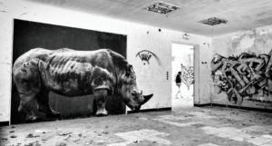 709 Matthias Duvivier Rhino