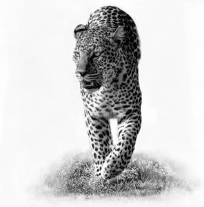 091 Michel Andrieux Romi, reine du Masaï Mara