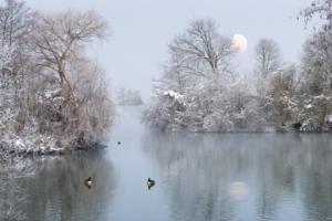 359 - Hervé Martin : Hiver sur l'étang 2