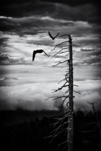 002 Sébastien Vidy Timberline , Oregon