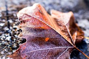 37  -  Givre d'automne  -  Séverine Amy