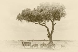 809 Michel Andrieux - L'ombre est la bienvenue mais rare