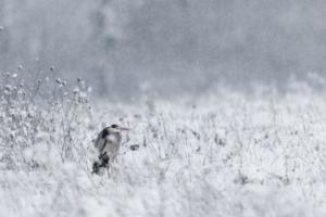 205 Michel Andrieux - Un jour dans son habit emmitouflé le heron au long bec