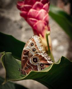 199 Sarah Cleon - Un papillon a fait le printemps