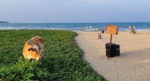 32 Florent  Poulain - Vache à la plage