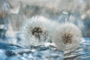 415 L'hiver douceur :  Ewa Kolecki