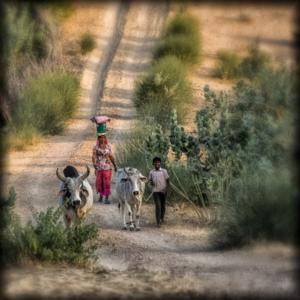 Béatrice Dumont - retour au village