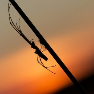 455 Sandrine Criaud : Dîner au soleil couchant