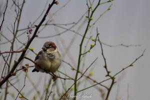 Oiseau (9)