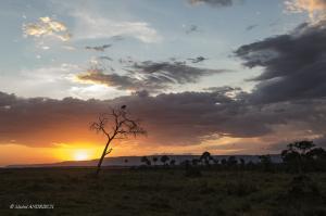 144-Coucher de Soleil sur le Masaï Mara