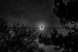 839 Guy Ravelet Nuit ensoleillée
