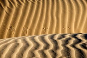 758 Andre Martchenko : Sahara