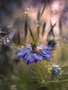 002 Ewa Kolecki - Au pays des merveilles