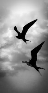 141 Sarah Cleon - Kakemono - deux silhouettes dans le ciel