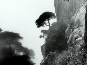 165 Christophe Penicaud - L'arbre opiniâtre