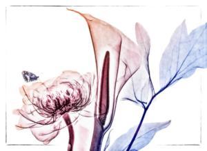 813-Béatrice-Dumont-Le-coeur-des-fleurs-dévoilé