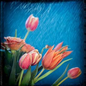 058 Béatrice Dumont - In the rain