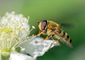 29 Jean-Marc Szultz - Succulent nectar