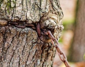 53 Philippe Bruch - la forêt enchainée