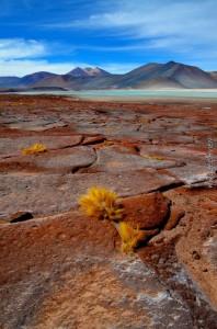 159 Marc Lec'Hvien : Laguna Miscanti, Atacama
